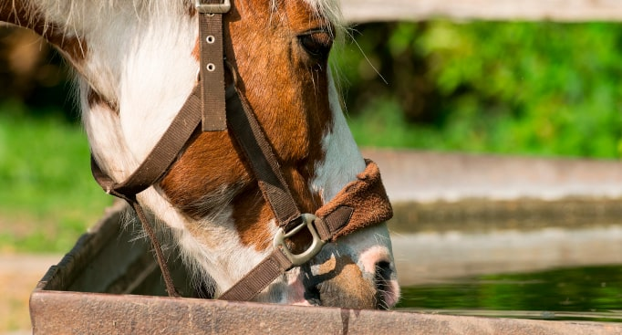 Pós-Graduação de Nutrição de Equinos (online)