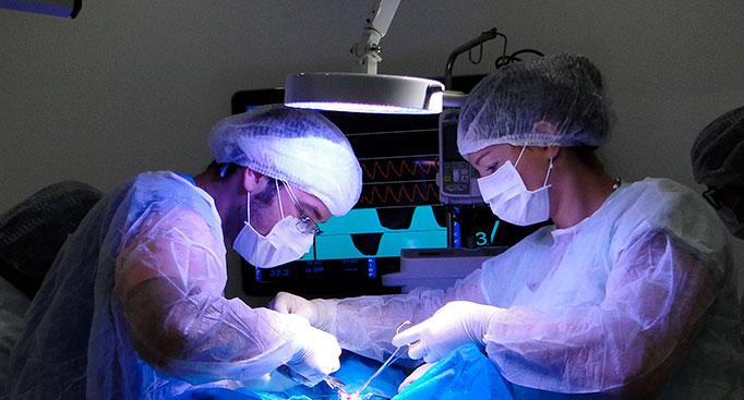 Pós-Graduação em Cirurgias de Pequenos Animais