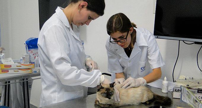 Pós-Graduação em Clínica Médica de Pequenos Animais
